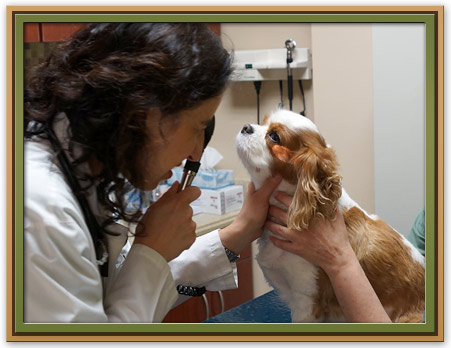 Glaucoma in Pets