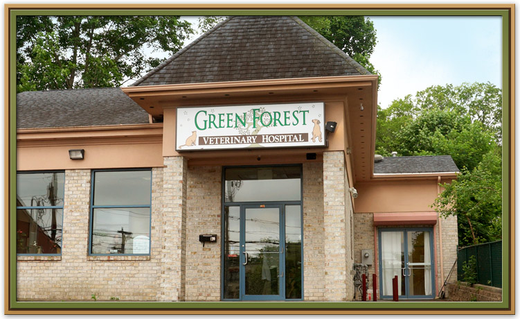 Welcome to Green Forest Veterinary Hospital